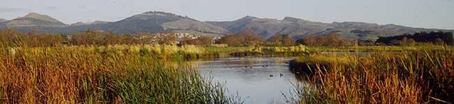 wetland-3.jpg