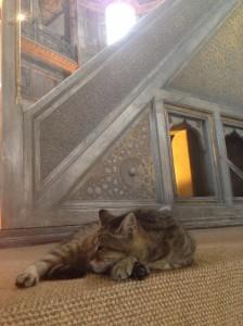 Hagia Cat