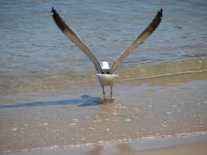 bird-1056389-640x480