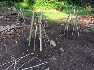 Melanesian garden, Novata farm